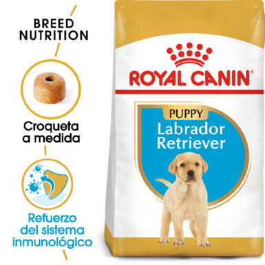 Royal Canin Labrador Retriever Puppy pienso perros