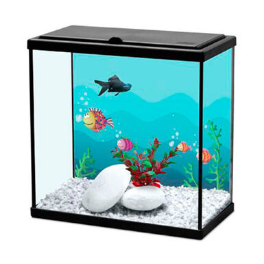 Aquário Kiwoko Start 30 para peixes de água fria