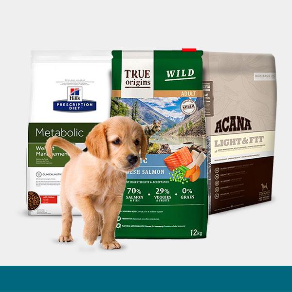 Promoções Cão