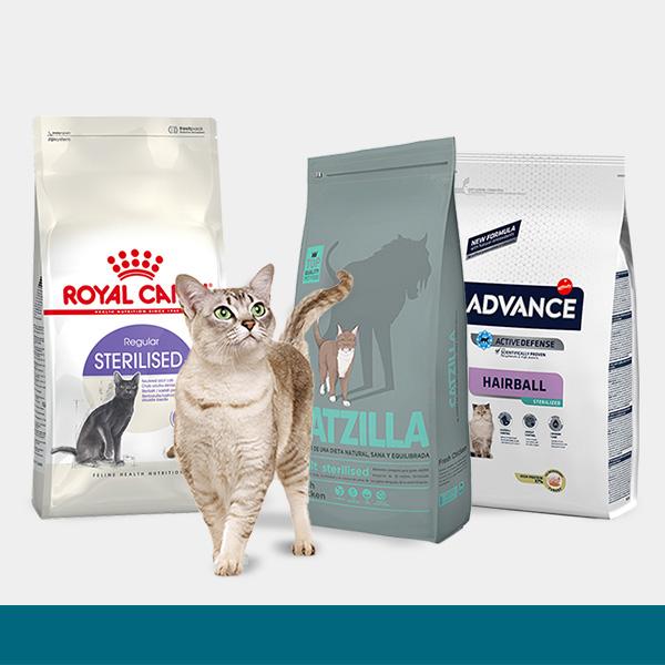 Promoções Gato